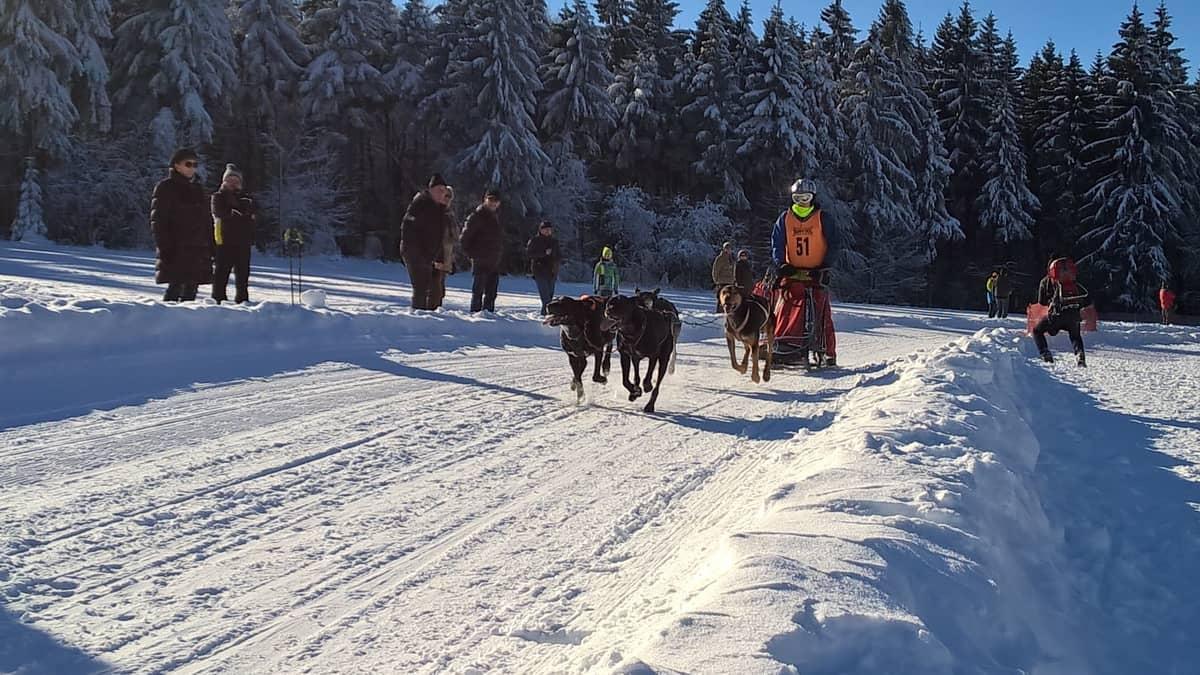 Pension Oberknapp - Schlittenhunderennen im verschneiten Winterwald - Ferien in Nassau/Frauenstein Erzgebirge im Winter im Erzgebirge wir bauen um und modernisieren